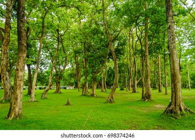 Beautiful green grassy area with  trees in a park.