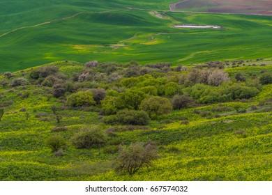 Beautiful green hills. view from Steptoe Butte state park, Washington, USA
