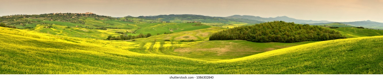 Beautiful green hills with yellow  flowering of rape and canola near Pienza (Siena). Italy
