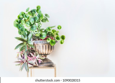 Beautiful green home interior and decor ideas. Urn planter with trends indoor plants : Chinese money plant ( missionary plant ) and Moses-in-the-Boat at white wall background