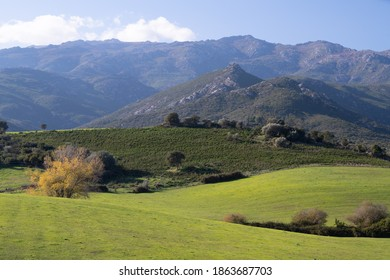 Beautiful green landscape in the north of Corsica