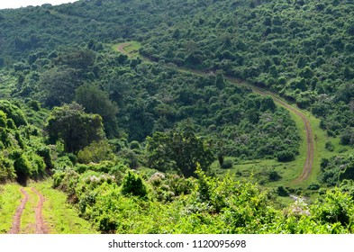 A beautiful green landscape, with a winding track through the Aberdare  National Park in Kenya.