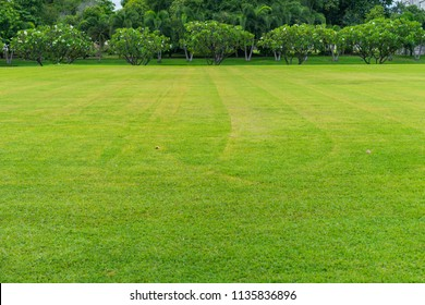 Beautiful green lawn and trees in summer.