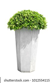 Beautiful green leaf  with  cement flowerpot on isolated background.