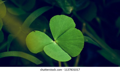 Beautiful green leaf of a plant isolated unique natural photo