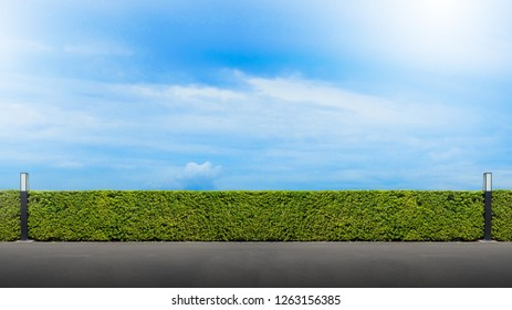 Beautiful green leaf wall hedge fence near cement road with blue sky and clound background copy space for backdrop.