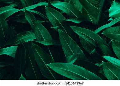 Beautiful green leaves for background.