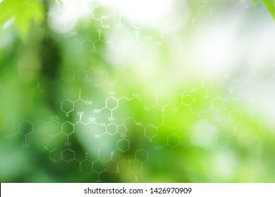 Beautiful Green leaves bokeh on white background