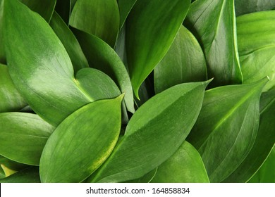 beautiful green leaves, close up