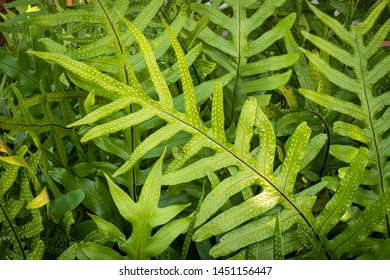 Beautiful green leaves of ferns in the forest. Select focus