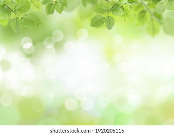 Beautiful green leaves on blurred background, space for text. Spring season