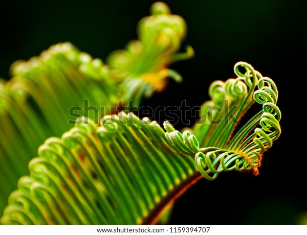 Beautiful Green Leaves Plant Isolated Unique Nature Stock Image 1159394707