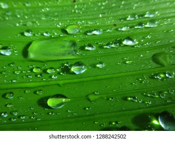 beautiful green leaves with sticking water