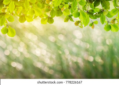 Beautiful green Leaves and sun light on the branches in the autumn forest.
