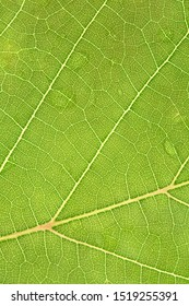 Beautiful green leaves of the tree. Picture is selective focus and close up style. Close up green leaf texture background, nature and ecology concept.