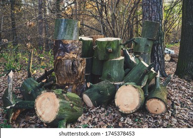Beautiful green logs sawn and piled in the forest