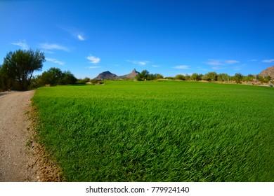 Beautiful Green Lush Golf Course Fairway Luxury Resort Landscape Scenic
