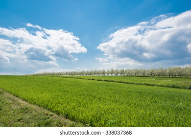 Beautiful green meadow on sunny summer day