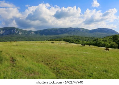 Beautiful green meadow where horses graze and then mountains and clouds in the sky