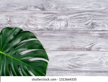 Beautiful green monstera leaves on the natural wood background. Copy-space for your text.