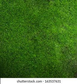 beautiful green moss