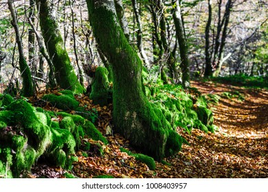 Beautiful green moss in autumnal forest, sun and shadows, natural concept, France