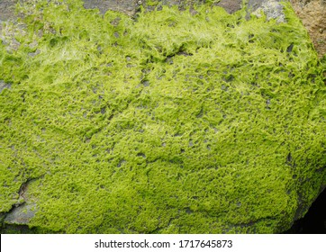 Beautiful green moss covered on the rock at sandy beach. Mossy stones texture.