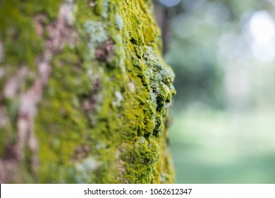 beautiful green moss  grass on old wood fertile nature  rain firest concept