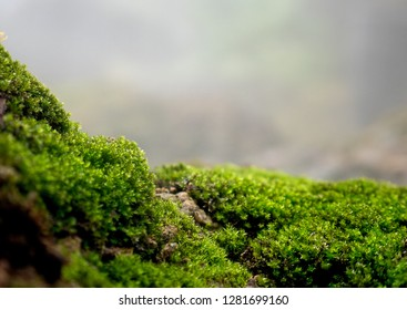 Beautiful green moss on the floor, moss closeup, macro. Beautiful background of moss for wallpaper