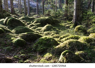 Beautiful green mossy ground in a sunlit coniferous forest