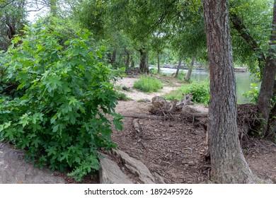 beautiful green nature scenic walking path