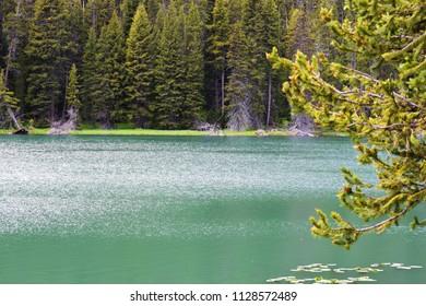 Beautiful green Nymph Lake Yellowstone National Park