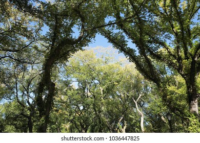 beautiful green outdoor landscape central park trees new york in late summer and blue sky view to nature
