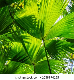 beautiful green palm leaves of tree in sunlight