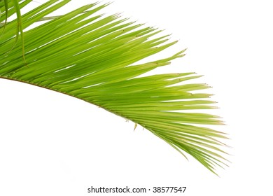Beautiful green palm tree leaf on beach