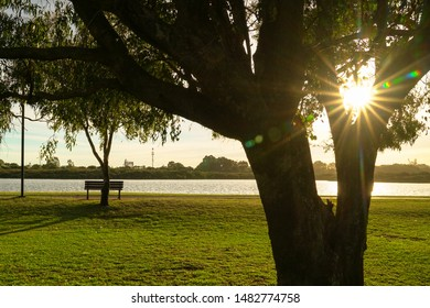 Beautiful green park next to river in the morning, sun rays through trees, nature background.