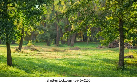 Beautiful green park scene as living space in warm afternoon lights