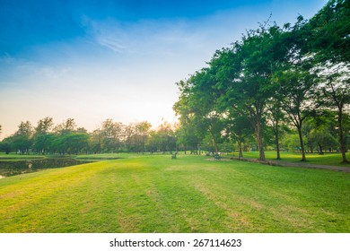 beautiful green park with sun light in evening, Sunset in park