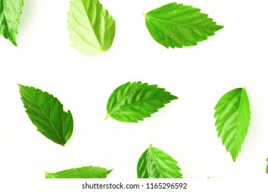 Beautiful Green and pink leaves on white background