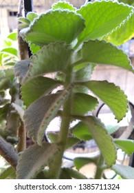 Beautiful Green Plant Photo graphy