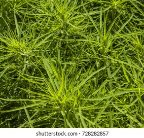 beautiful green plant, shrub