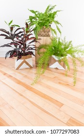 Beautiful green plants in a room with wooden floor. Boston fern, Asparagus fern and Croton plant. Space for text.