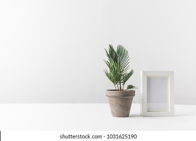 beautiful green potted plant and empty photo frame on white