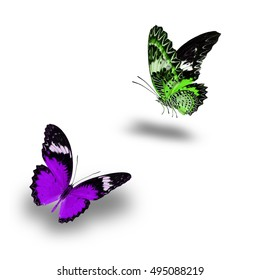 Beautiful Green and Purple butterfly flying up