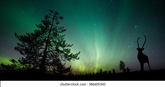 A beautiful green and red aurora dancing