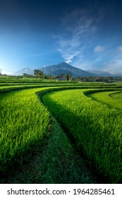 Beautiful green rice field in the morning against blue sky in Selotapak, Trawas, Mojokerto, Noise and Grainy Image  - Shutterstock ID 1964285461
