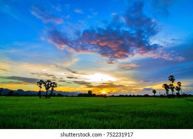 beautiful green rice field in the sunset time