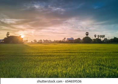 The beautiful green rice fields and sunrise