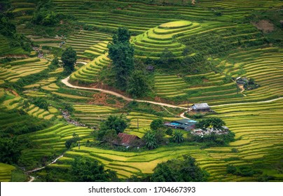 Beautiful green rice terrace paddy field natural fresh at SA PA is the famous place and travel destination located in Sa Pa Hoang Lien Son mountain range, Lao Cai Province, Vietnam