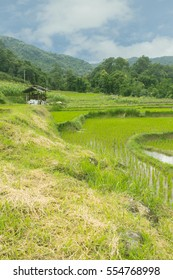 Beautiful green Rice Terraces in Doi inthanon, Maeglangluang Karen village